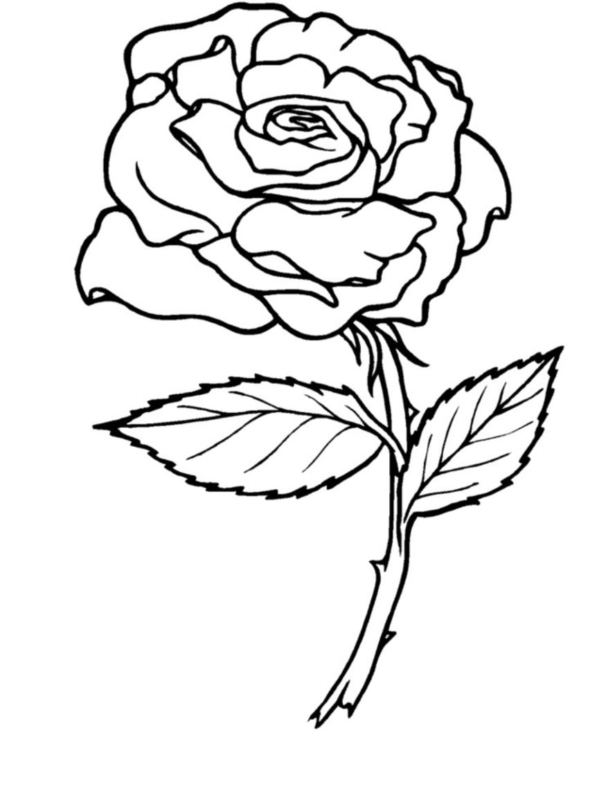 852x1136 Easy Free Coloring Pages Of Roses And Heart Rose Banner Colouring