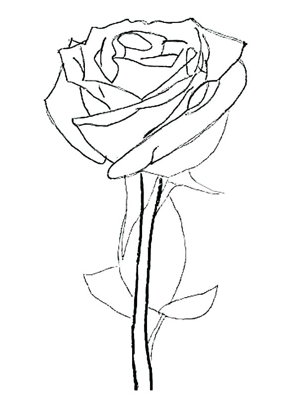 600x815 Coloring Pages Of Roses Coloring Pages Rose Rose Flower Coloring