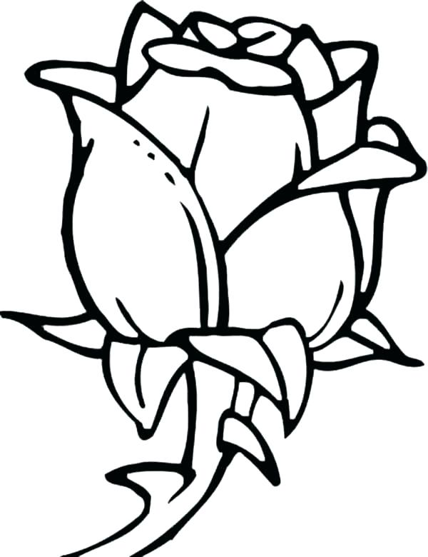 600x780 Coloring Pages Rose Printable Rose Coloring Pages Free Printable