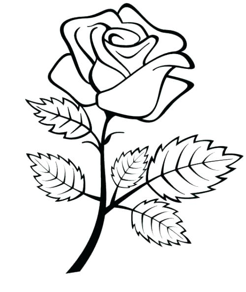 500x594 Coloring Pages Rose Rose Coloring Pages Rose Coloring Pages