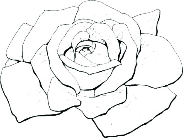 618x464 Coloring Page Of A Rose Coloring Rose Bud Coloring Pages