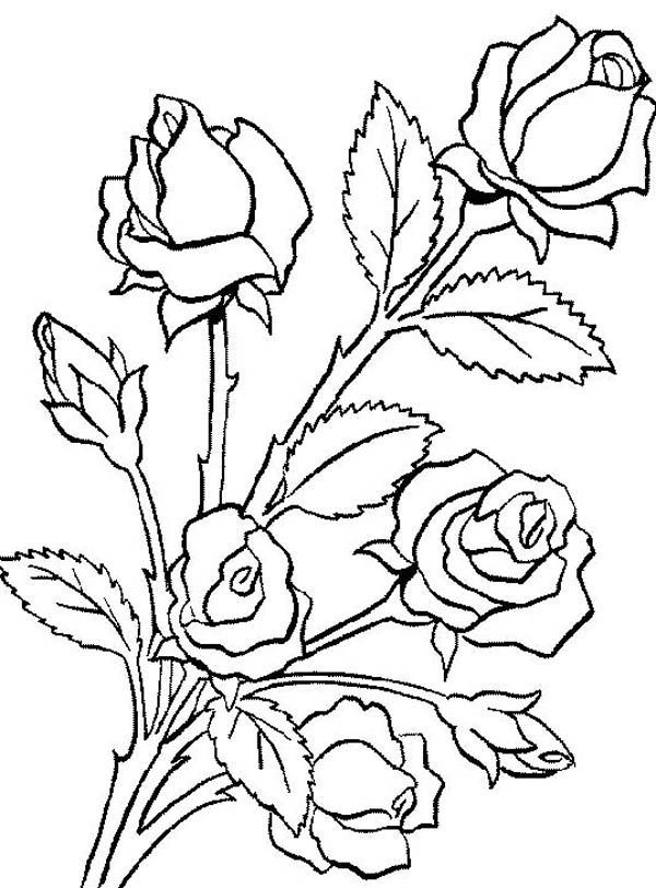 600x812 Flower Bouquet, Flower Bouquet Is Made Of Roses Coloring Page
