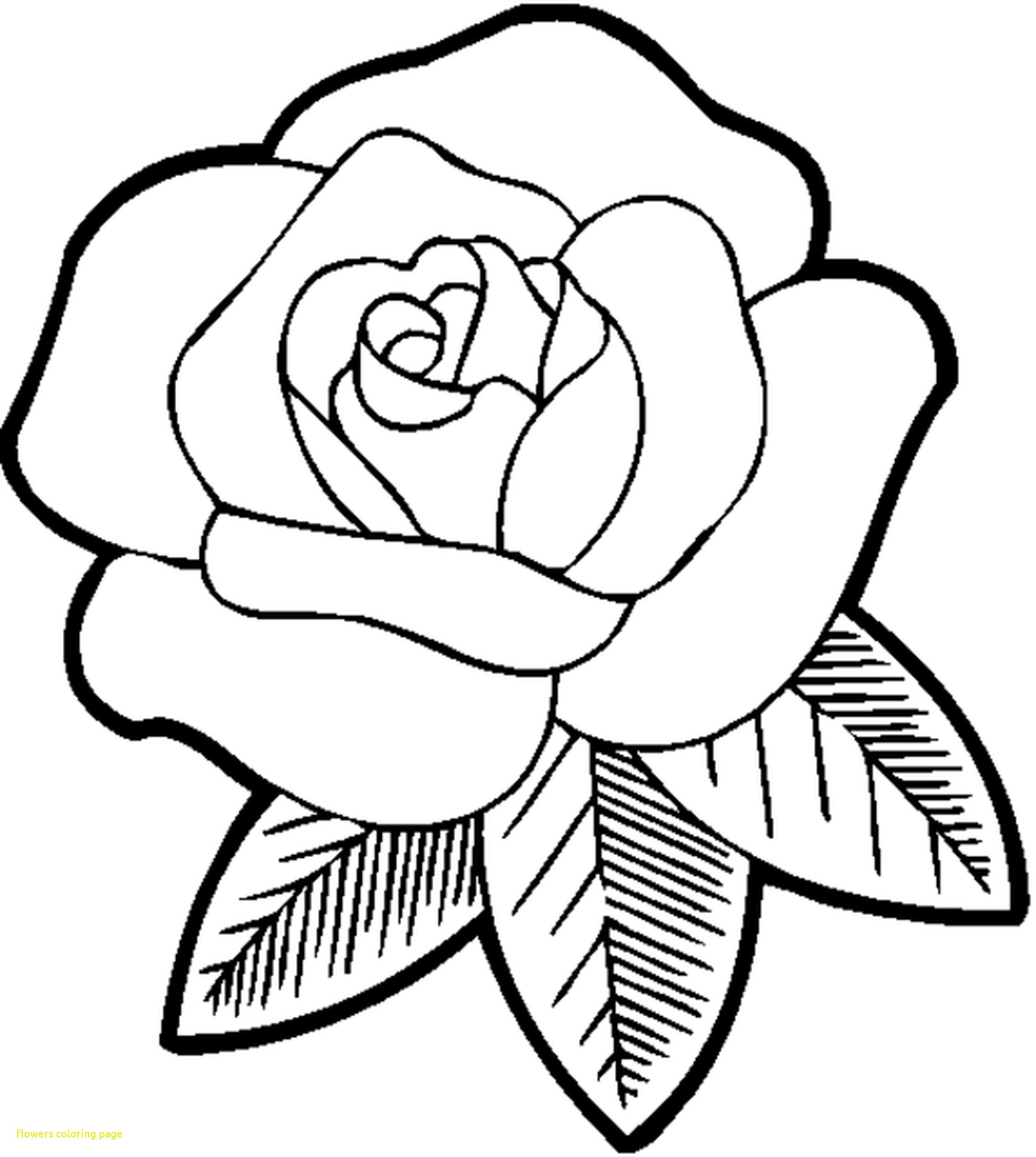 2550x2849 Now Coloring A Rose Tremendous Page Of Pages Roses Beauteous Acpra
