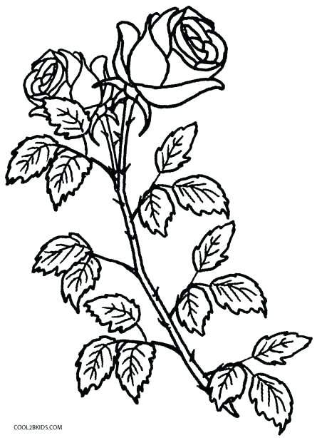 445x614 Plant Coloring Pages Coloring Pages Roses Free Plant Colouring