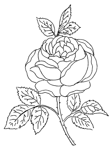 360x480 Rose Blossom Coloring Page