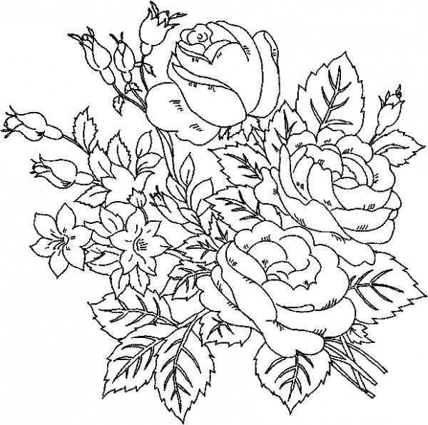 600x596 Beautiful Roses Flower Coloring Page