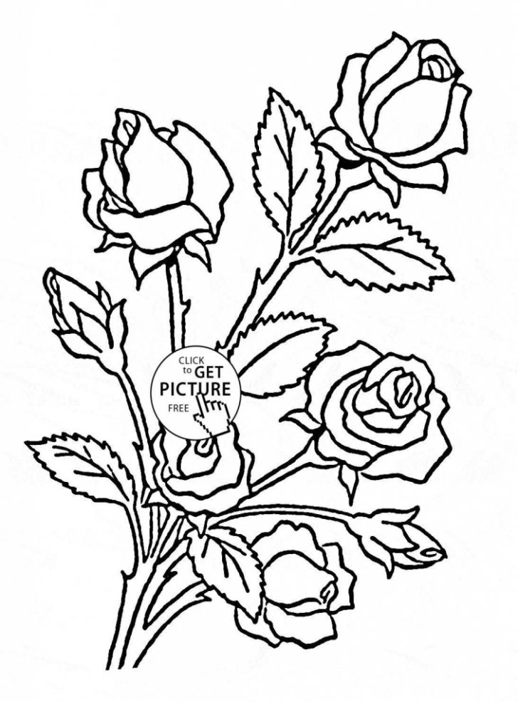 728x986 Flower Archives Coloring Pages Kids