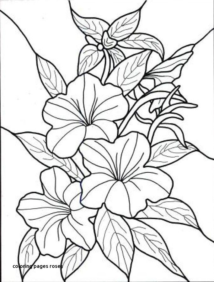 682x900 Cecile Brunner Or Polyantha Rose Bush Coloring Page For Coloring