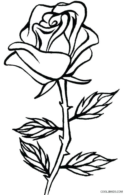 531x820 Amy Coloring Pages Coloring Pages Rose Coloring Pages Draw Rose