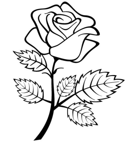 500x594 Flowers Roses Coloring Pages For Preschool