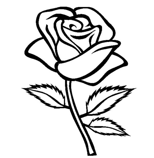 600x612 Rose With Three Leaves Coloring Page