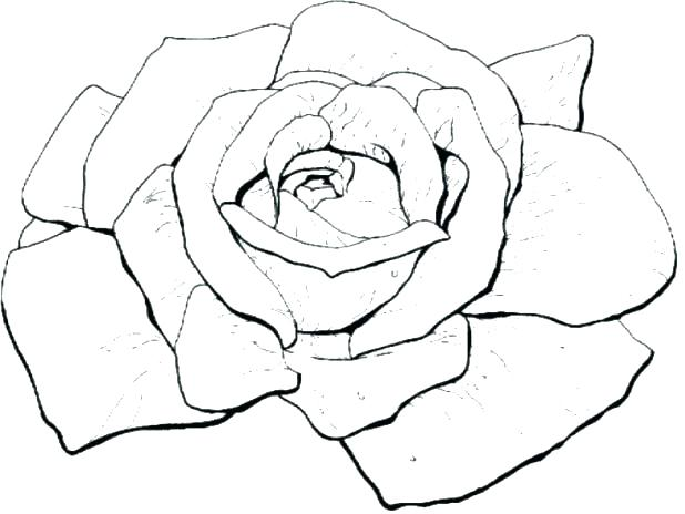 618x464 Coloring Pages Roses Rose Coloring Page Rose Coloring Sheets Bloom