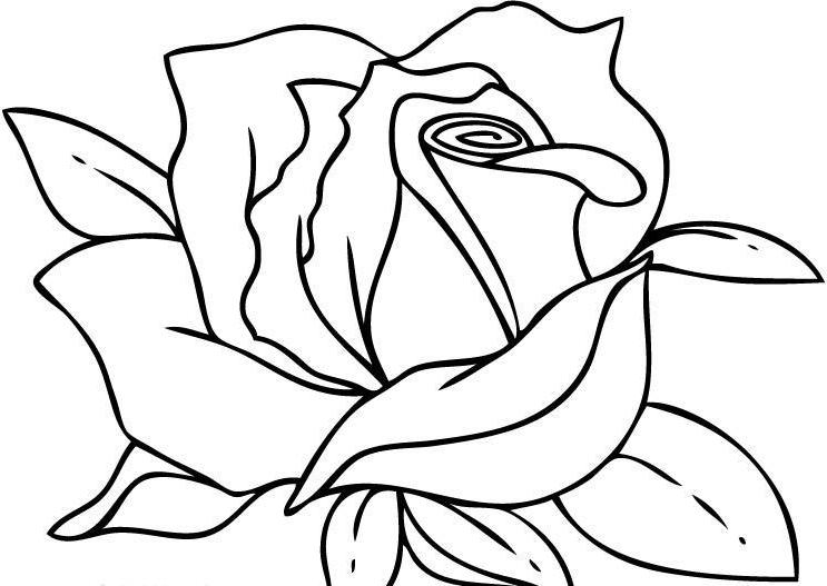743x527 Projects Idea Of Rose Coloring Pages For Adults Easy Images Border