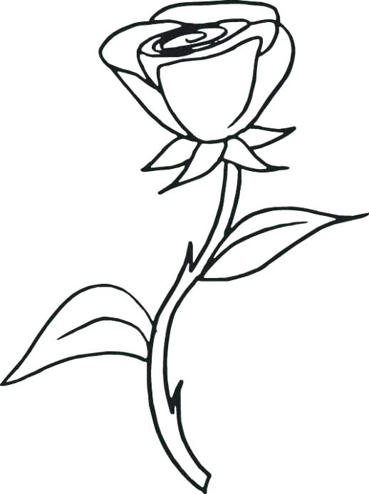 518x693 Rose Coloring Page Coloring Pages Of Rose Rose Flower Coloring