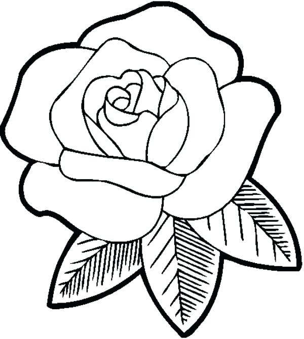 600x670 Rose Coloring Pages Big Beautiful Rose Coloring Page Rose Flower