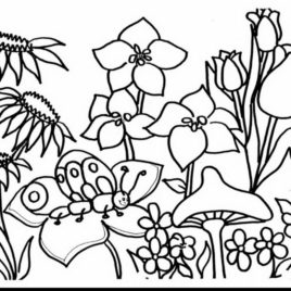 268x268 Rose Garden Coloring Page Kids Drawing And Coloring Pages