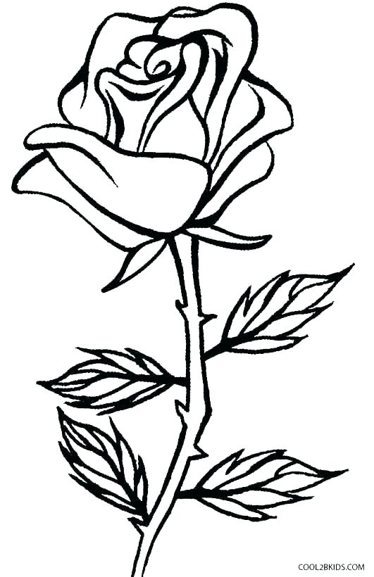 531x820 Coloring Pages Of Roses