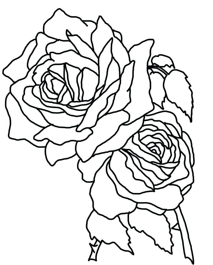 700x872 Coloring Pages Roses Coloring Pages Rose Rose Coloring Page Roses