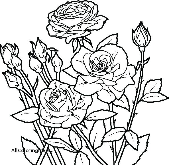 593x577 Coloring Pages Roses Mandala Coloring Pages Roses Rose Flower