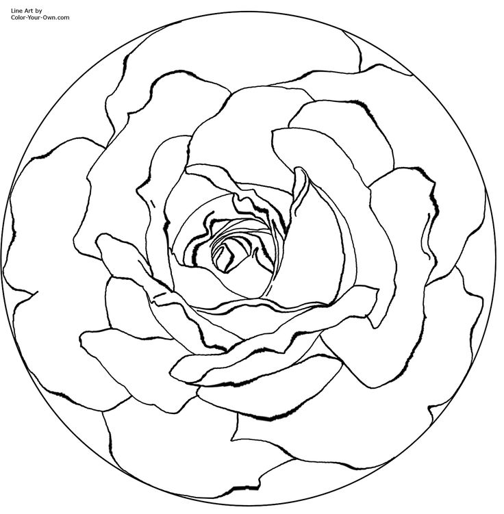 736x751 Best Flower Pic Images On Colouring Pages, Adult