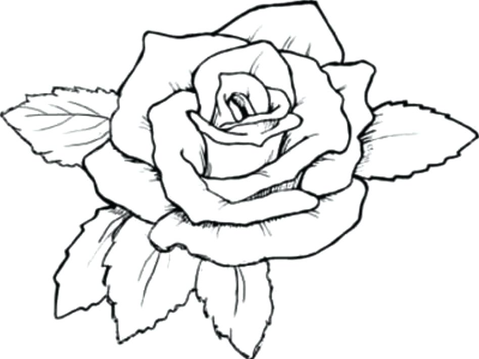 948x711 Rose Coloring Page With Wallpaper Free Coloring Rose Mandala