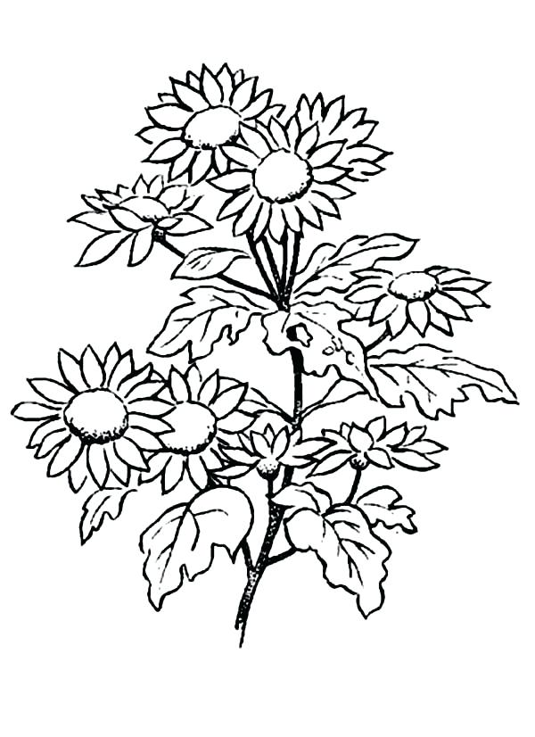 600x826 Daisy Coloring Pages Daisy Petal Coloring Page Daisy Coloring