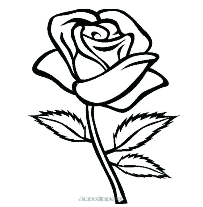 658x671 Roses Coloring Pages Printable