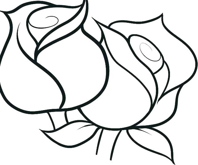 643x535 Printable Rose Coloring Pages