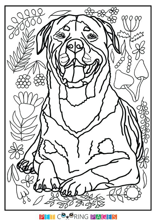 500x711 Rottweiler Coloring Pages