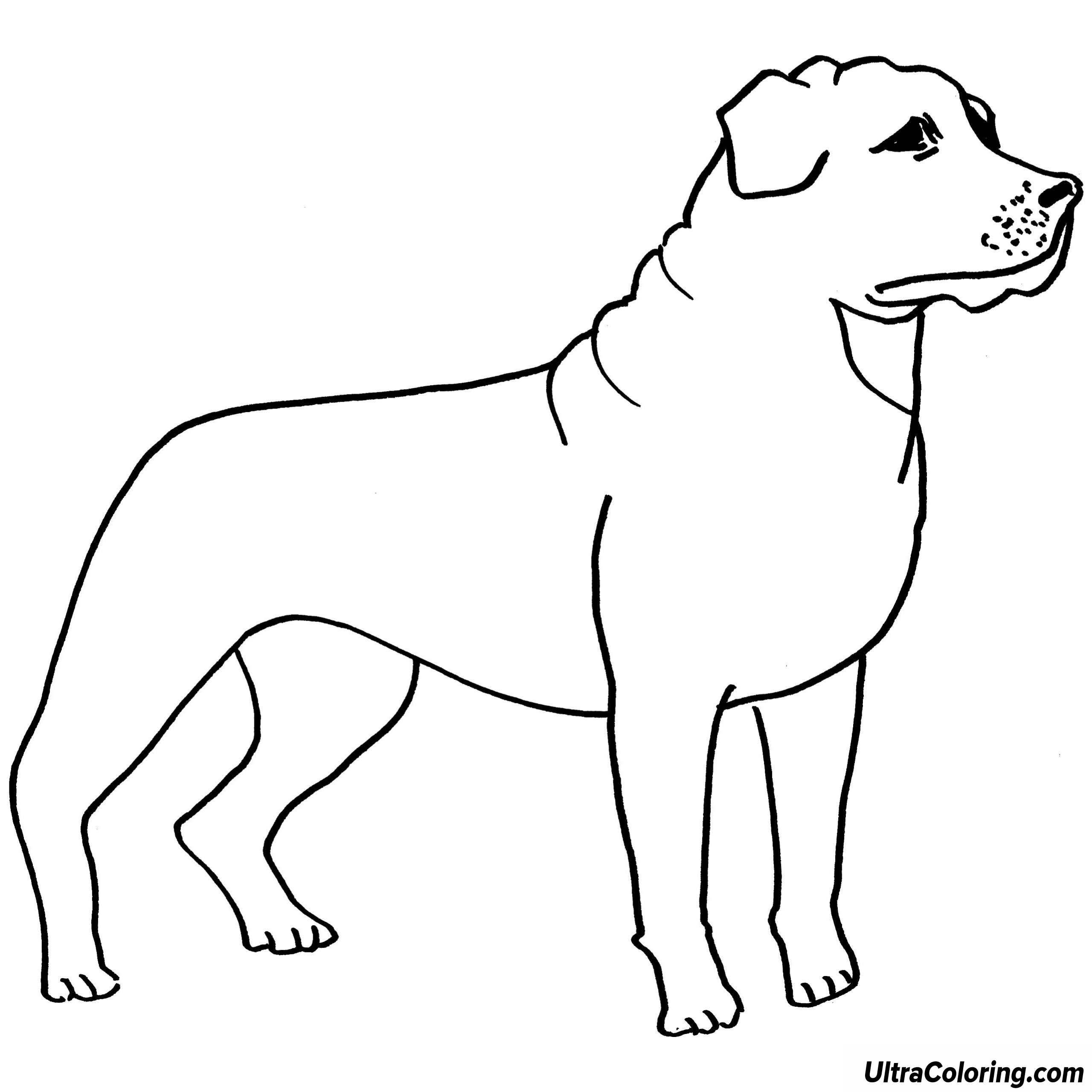 2560x2560 Rottweiler Coloring Pages Large Blank Sheet Template Printable