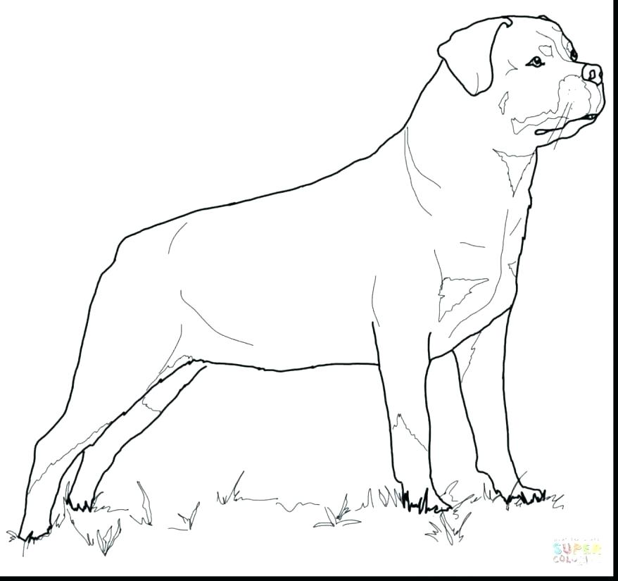 878x825 Rottweiler Coloring Pages Coloring Pages Of Pit Bulls Coloring