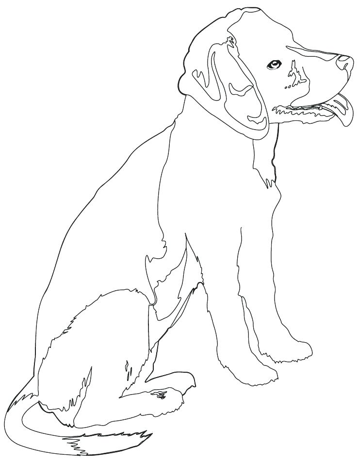 738x954 Rottweiler Coloring Pages Rottweiler Coloring Pages Rottweiler