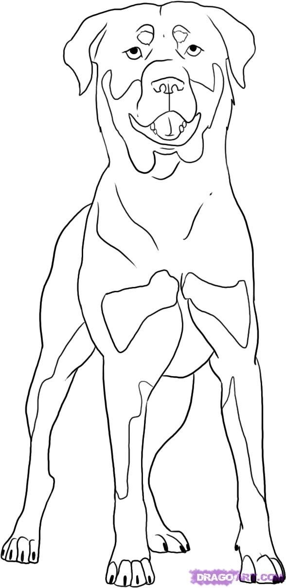 588x1207 Rottweiler Coloring Pages Rottweiler Colors And Markings Step