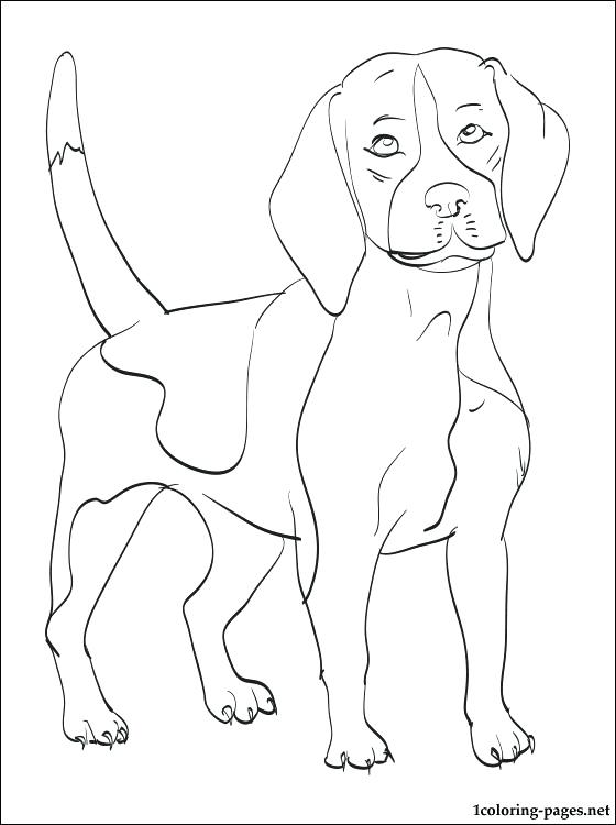 560x750 Beagle Coloring Pages Rottweiler Animal Coloring Pages Beagle