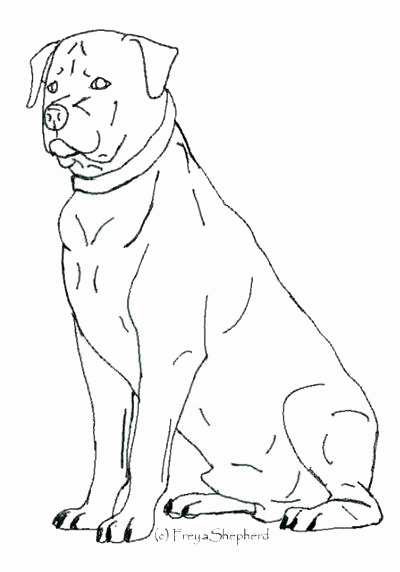400x572 Pitbull Coloring Pages Kjnoons Rottweiler Coloring Pages