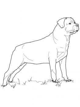 262x350 Rottweiler Projects To Try Rottweiler, Dog Pattern