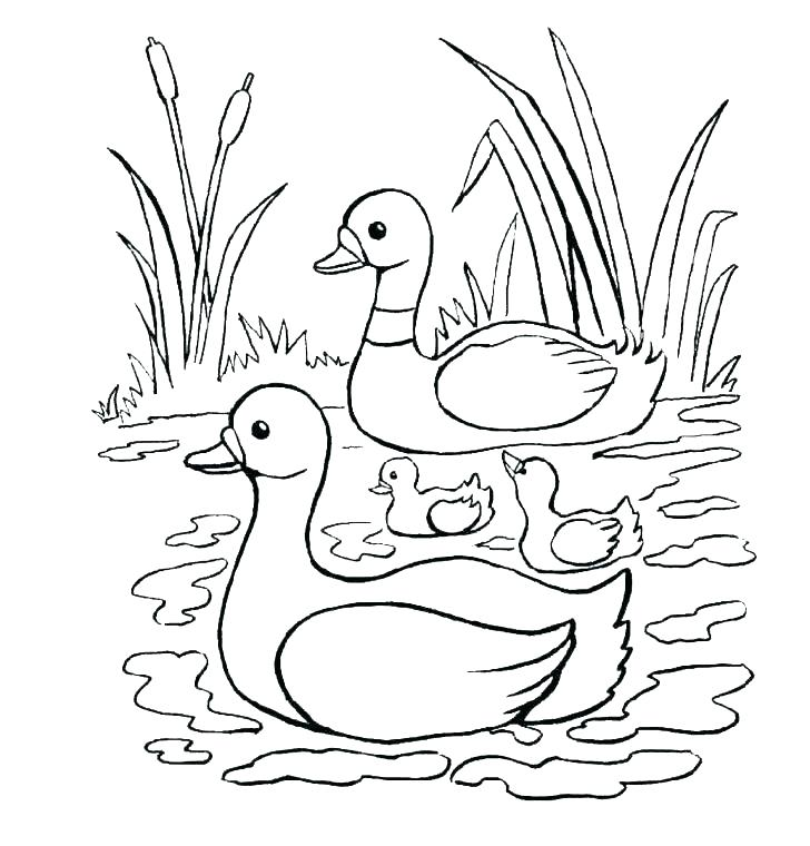 728x760 Rubber Duck Colouring Simple Free Printable Coloring Pages