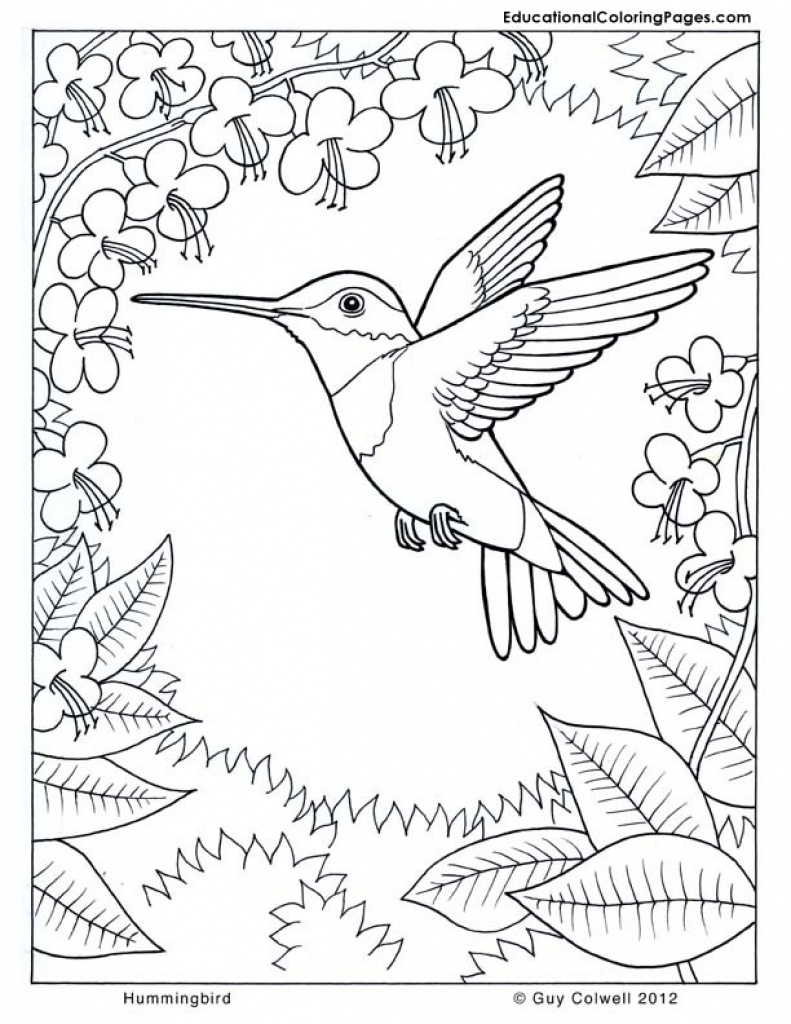 791x1024 Difficult Hummingbird Coloring Page For Older Kids Animal
