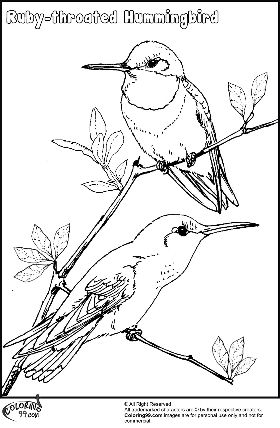 980x1500 Hummingbird Birds Coloring Pages