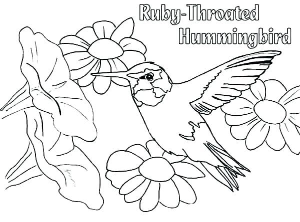 600x445 Hummingbird Coloring Page Free Coloring Pages For Adults Mama