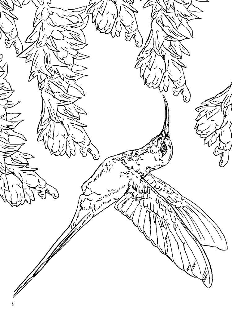 750x1000 Hummingbird Coloring Pages Download And Print Hummingbird