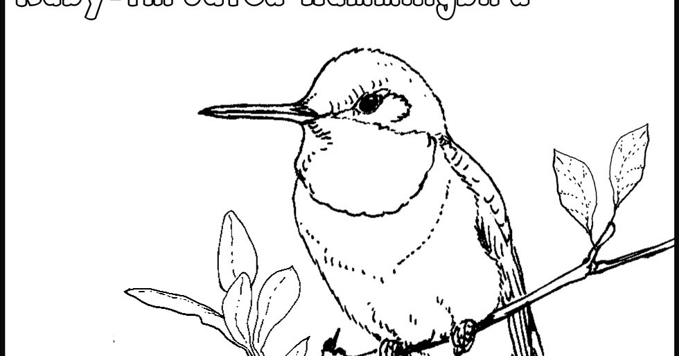 980x514 Ruby Throated Hummingbird Coloring Pages