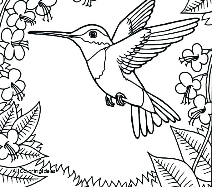 Ruby Throated Hummingbird Coloring Pages at GetDrawings.com | Free ...