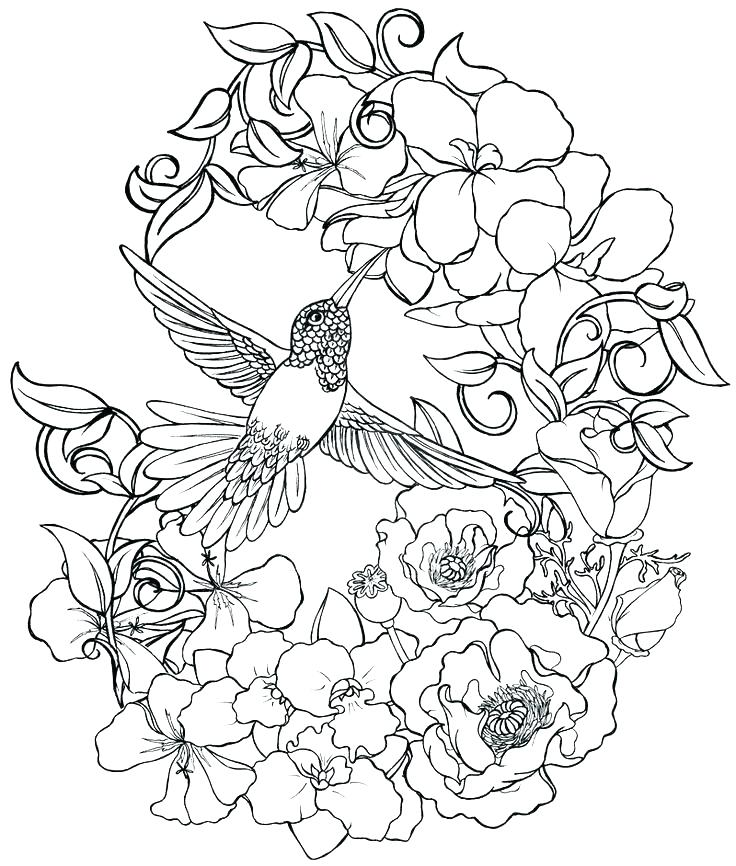 736x866 Coloring Pages Of Hummingbirds Hummingbird Coloring Pages
