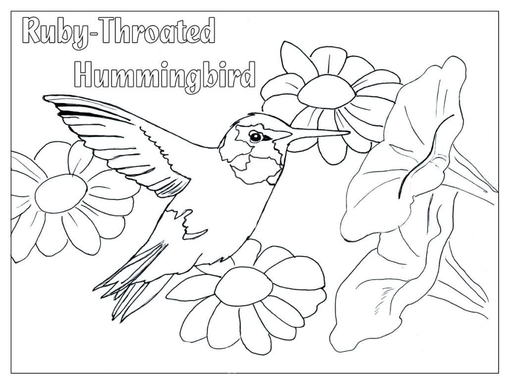 1024x780 Contemporary Ruby Throated Hummingbird Coloring Pages Photo