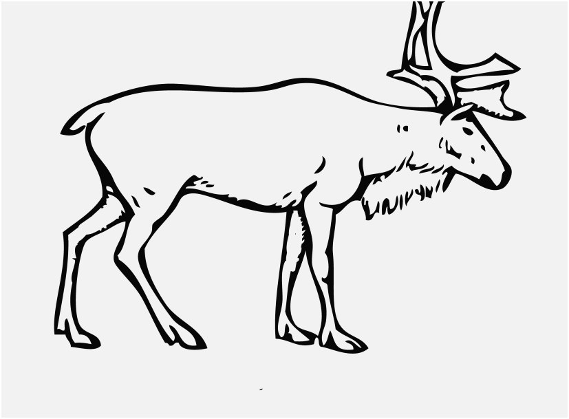 827x609 Reindeer Coloring Pages Pics Reindeer Coloring Page With Rudolph