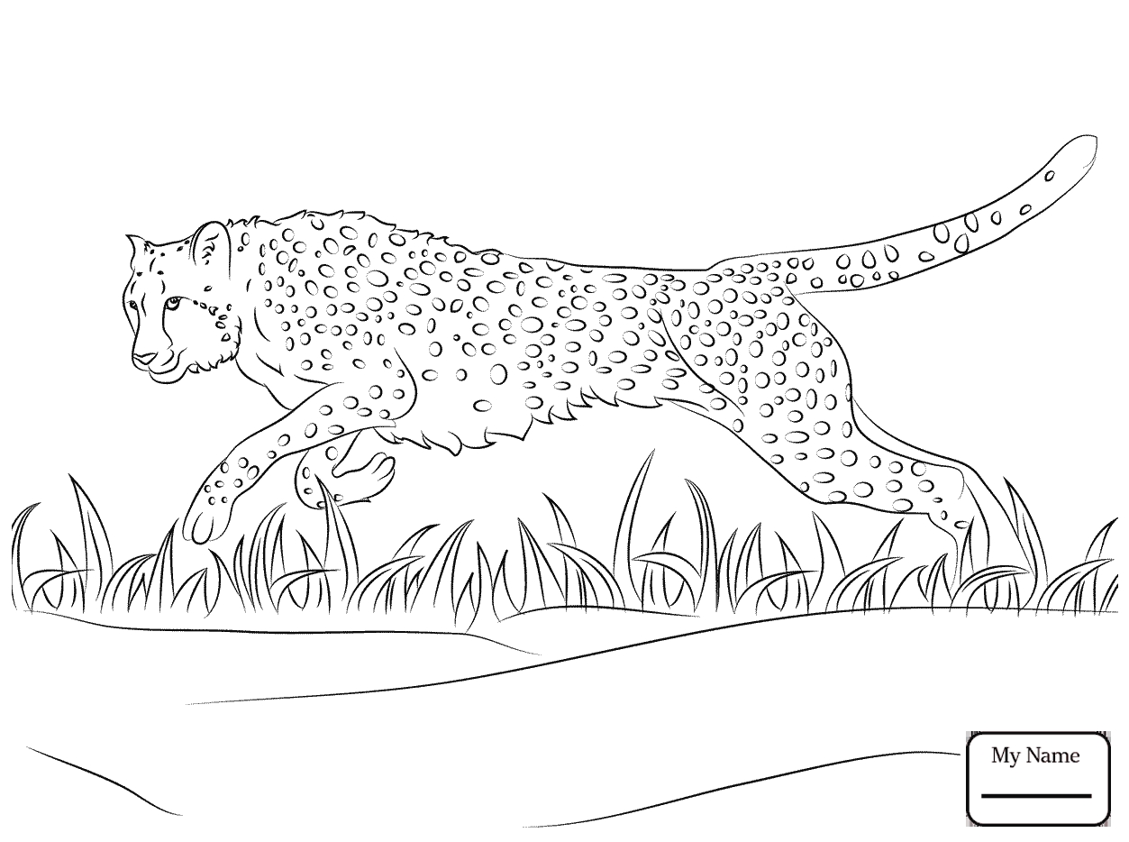 1253x934 Cheetah Running Coloring Pages Download Coloring For Kids