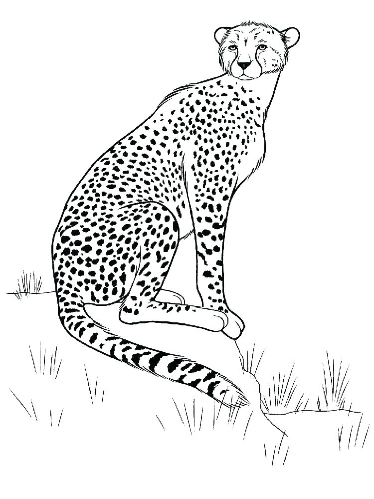 750x1000 Coloring Pages Of Cheetahs Cheetah Coloring Pages Coloring Pages