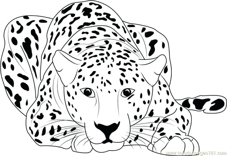 960x661 Running Coloring Pages Cheetah Running Coloring Pages Photograph