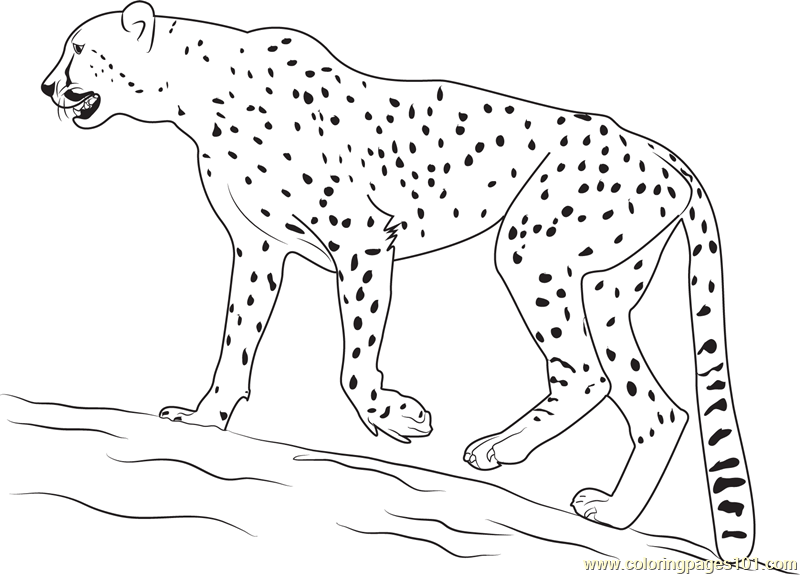 800x575 Walking Cheetah Coloring Page